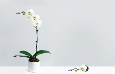 only-orchid-config